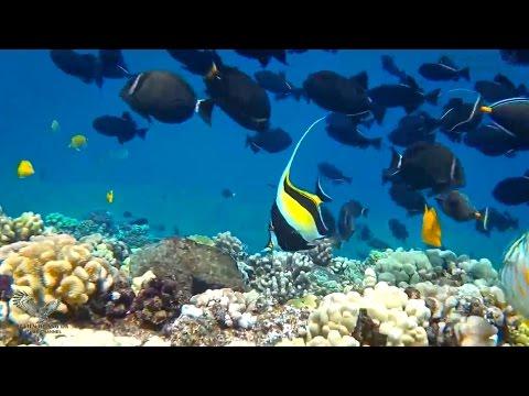 Hawaii hoang dã - Bí mật dưới biển sâu - HD Thuyết minh