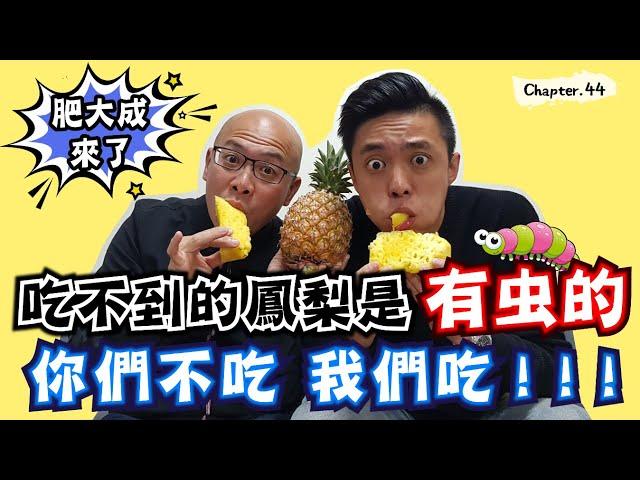 香港人也看不過眼!!鳳梨裡真有蟲嗎?我們帶你去看......[高佬肥仔] #移民台灣 #香港人在台灣 #高佬肥仔 #台式生活