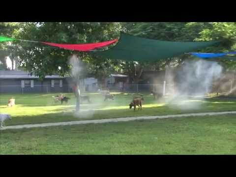 Dog Dude Ranch of Miami - Best dog kennel in Miami