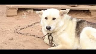Приют для бездомных животных «Ковчег» просит помощи в переезде на новое место