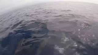 Offshore Spearfishing