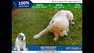 Funny dogs & NUTRIVET zdrava hrana za pse i mačke (8)