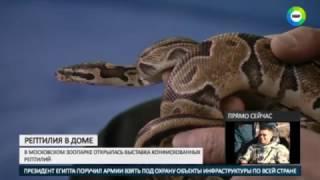 В фокусе  осторожно, рептилия в доме
