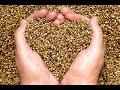 5 Incredible Health Benefits of Hemp Seeds