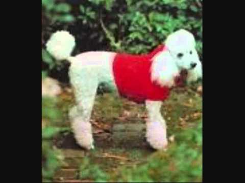 Retro Knitting Site Dog Coat Patterns Youtube