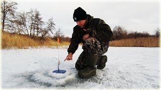 БРАКОНЬЕРЫ НАСТАВИЛИ СЕТИ и ВЫЛАВЛИВАЮТ ВСЮ РЫБУ Как ловить после них Рыбалка на ЖЕРЛИЦЫ 2020