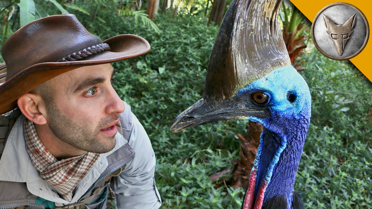 A cassowary, a rare emu-like bird, attacks and kills Florida man, officials say