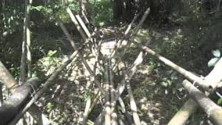 Scary Suspension  Bamboo Bridge Built By Remote Bidayuh Tribes Deep In The Jungles Of  Borneo