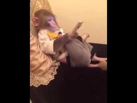 Monkey Ipad