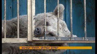 Հայաստանում կբացվի արջերի առաջին ապաստարանը