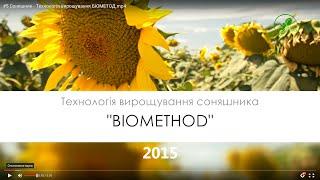 №28  Соняшник   Технологія вирощування БІОМЕТОД врожай 2015