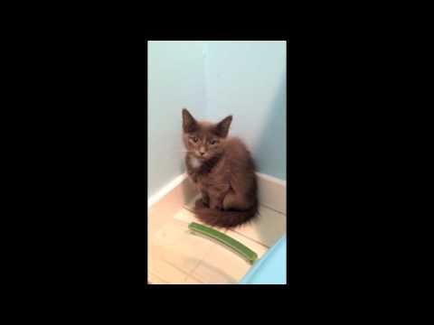 Feral Kitten Arrives