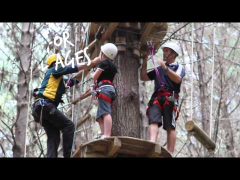 Whangarei Love it Here: Adventure Forest