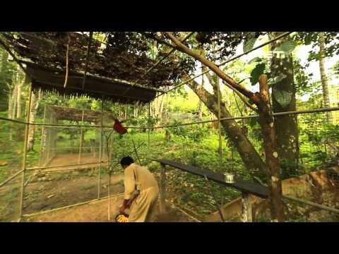 NET17 - Pulau Seram, Surga Burung Endemik di Maluku