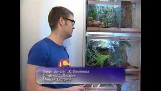Пауки-птицееды! 400 опасных пауков в квартире!!! (Tarantula, Minsk)
