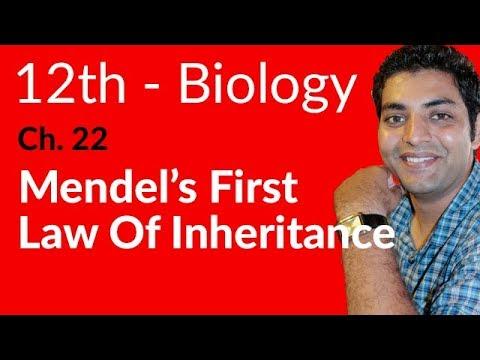 Mendel's 1st Law of Inheritence Biology - Biology Ch 22 Variation & Genetics - FSC Part 2