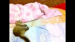 видео витамины для котят