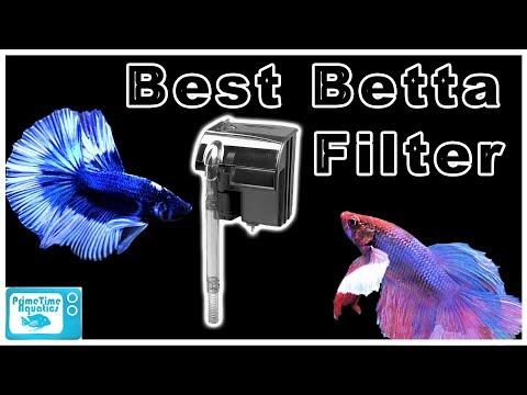 The Best Betta Filters For Your Aquarium