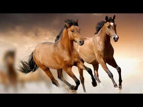 Le cheval au galop youtube - Comment dessiner un cheval au galop ...