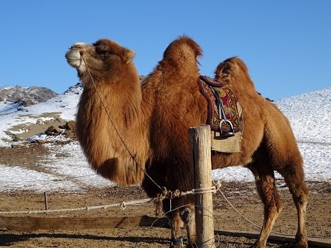 Winter Trip Mongolia 2016