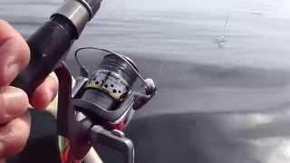 鎌倉カヤック釣りバカ日記(5/30)-大漁なり、サバが釣れすぎて困るの巻②.