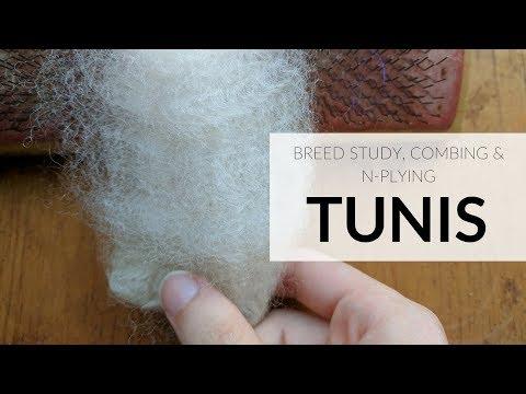 Tunis Fleece Combing, N-Plying & Breed Study!