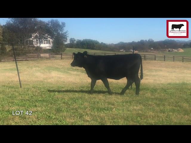 Powell Farms Lot 42