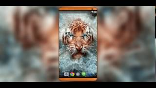 Angry Tiger Live Wallpaper