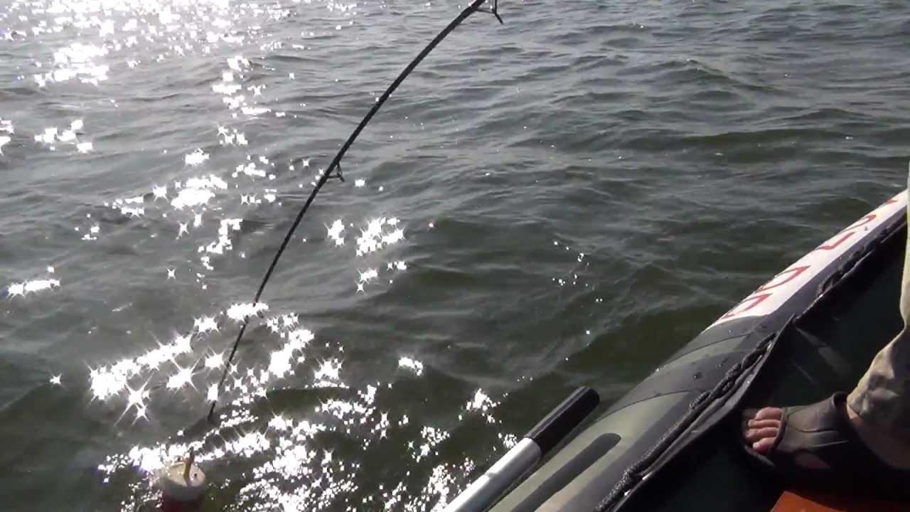 ловля на квок на куйбышевском водохранилище