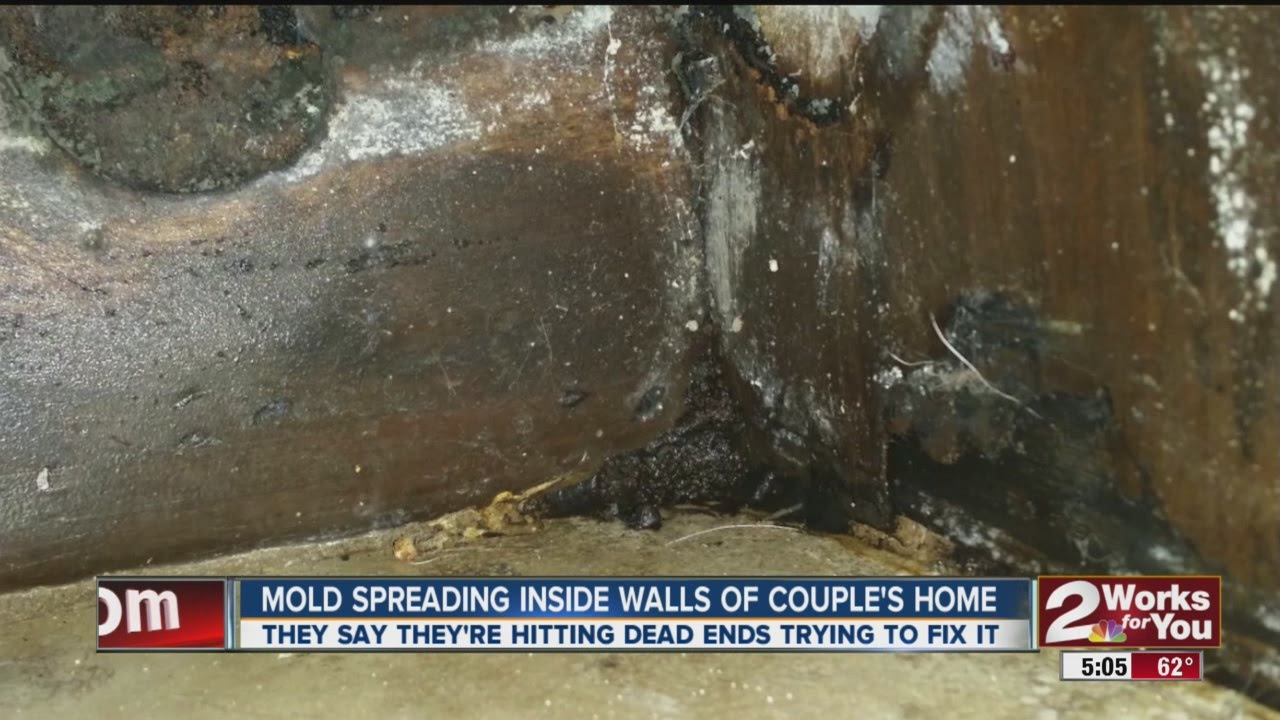 How to identify black mold - Mold Spreading Inside Walls Of Home