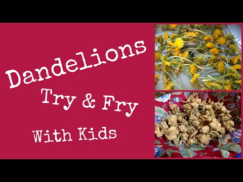 fry-&-try-dandelions-for-the-first-time!!!