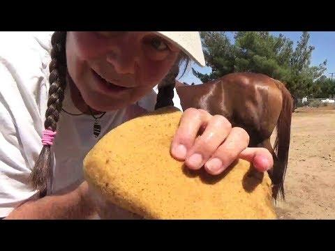ASMR Free Spirit Day Spa for Horses ~ Relaxing Slice of Life ☀️