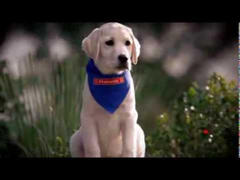 K9 Advantix® II TV commercial 2013