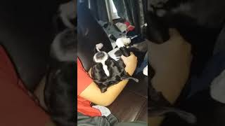 shake it all about🤣😂/funny dog