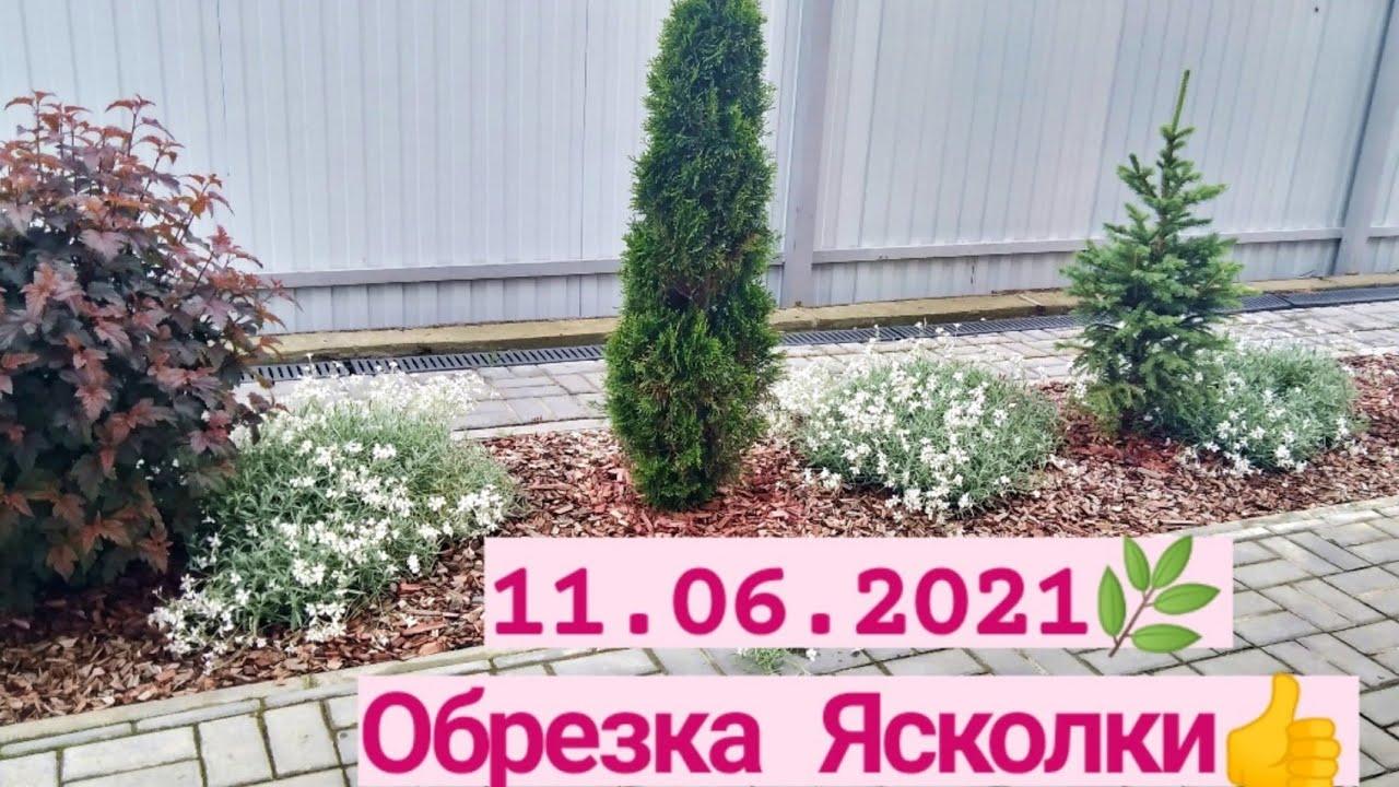 Мой сад 11.06.2021 ❤️/ Обрезка Ясколки
