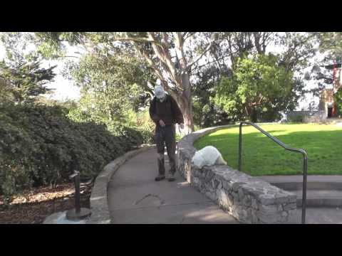 Coit Tower Stair Walk with Eduardo the Leash-Walking Cat