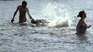 Doolin dolphin angry..avi