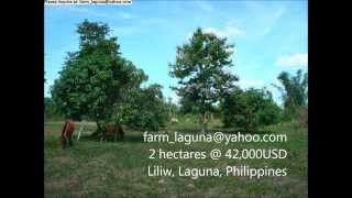 LAGUNA FARM with income for SALE 2 hectares at 42,000USD or PAWN 28,000USD