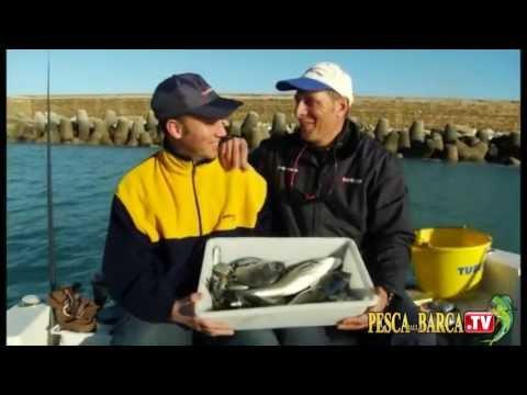 Come pescare a bolognese dalla barca