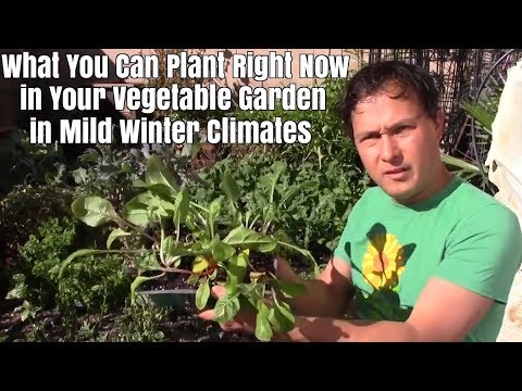 What You Can Plant Right Now in Your Vegetable Garden for Mild Winter Climates