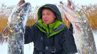 Щуки монстры обрывают леску и не лезут в лунку! Зимняя рыбалка на трофейного хищника 2019!