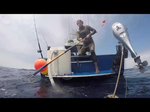 Bluefin Tuna Spearfishing Bonanza 2016