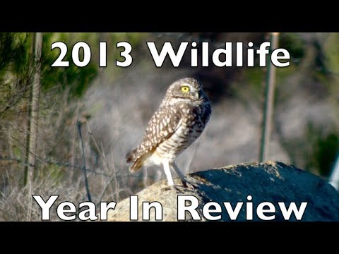 2013 Wildlife Year In Review
