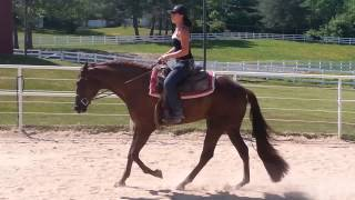 2 yo hus hot n blazing x sky blue boy mare