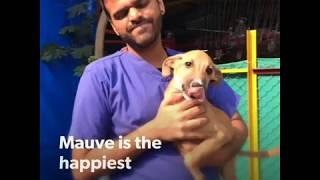 This 3-Legged Puppy Runs Like the Wind!