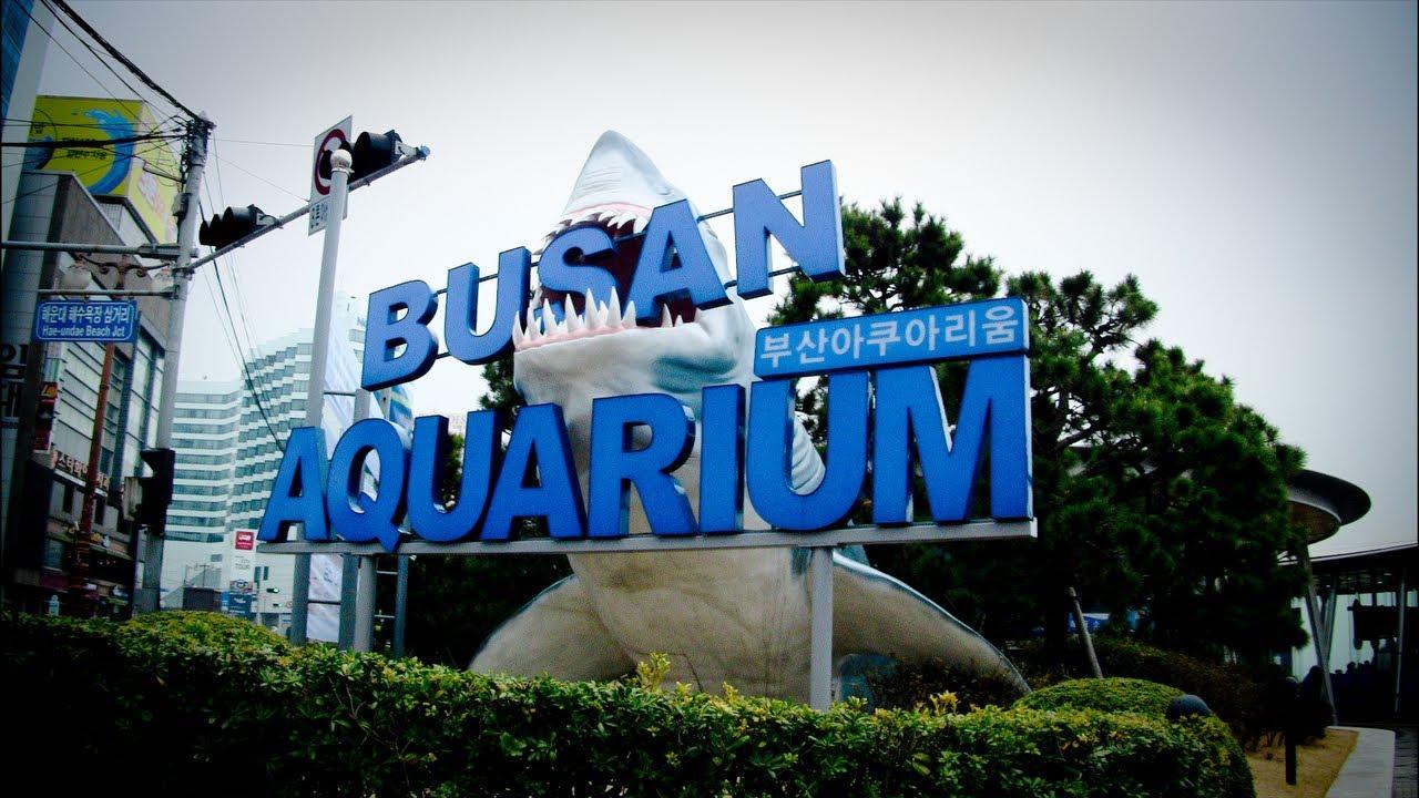 نتيجة بحث الصور عن اكواريوم بوسان