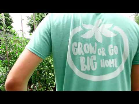 Hydroponic Lettuce Harvest - MASSIVE SUCCESS!