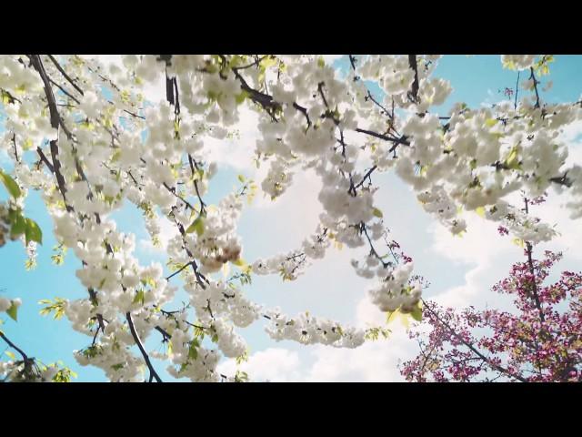 Gedichte für die Hosentasche · Trailer zur Taschenbuchreihe · Film von Frank Suchland