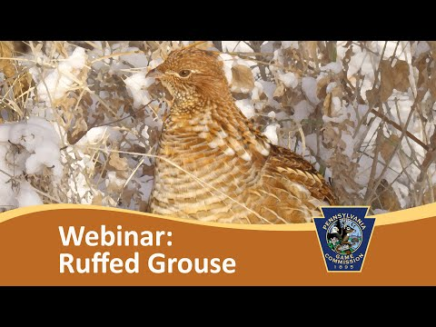 Where To Implement Pennsylvania Grouse Habitat Management? GPAST