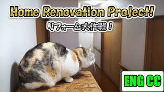 House cats stopped in spite of themselves. Home Renovation Project!【Eng CC】